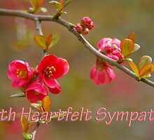 flowering quince symapthy card by dedmanshootn
