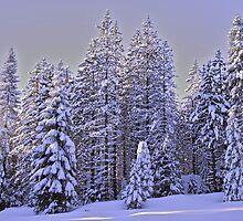 Snowy Sequoia's by jaskiran