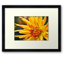Golden Fingers Framed Print