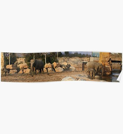 Baby Elephant Chester Zoo Poster