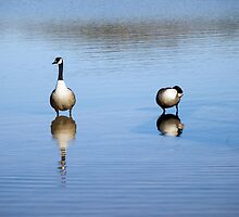 Rippling Geese by timmcmurdo