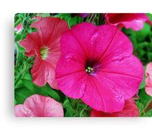 Vibrant Pink Petunia Macro Canvas Print