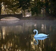 Swan Song in the Morning by timmcmurdo