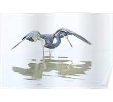 Tricolored Heron hunting behaviour Poster