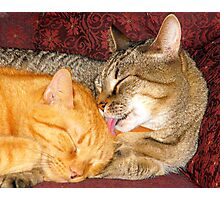 Momma Cat Photographic Print