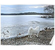 Sniffing The Air - Winter At Tuckertown Pond - Series 2011 Poster