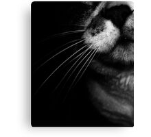 02-25-2011  My Cat's Nose Canvas Print