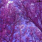Pink Forest - Fantasy Pine Tree Woods by Betty Northcutt