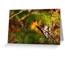 Goldfinch Singing Greeting Card