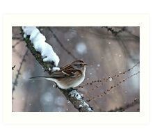 Snowy Tree Sparrow Art Print