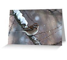 Snowy Tree Sparrow Greeting Card