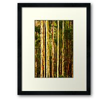 Wet Mountain Ash Trees Framed Print