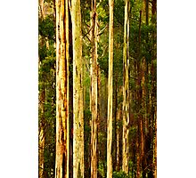 Wet Mountain Ash Trees Photographic Print