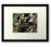 Snake in the Grass Framed Print