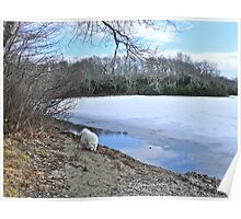 Following A Scent - Winter At Tuckertown Pond - Series 2011 Poster