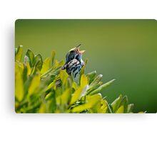 Savannah Sparrow Canvas Print
