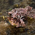 On The Rocks Series - Strange Seaweed by reflector