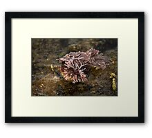 On The Rocks Series - Strange Seaweed Framed Print