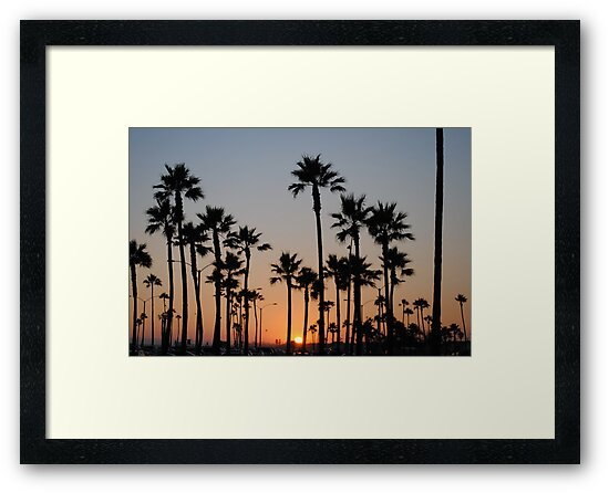 California palms on beachfront by bethischeery