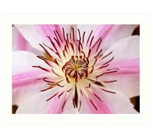 """Clematis """"Nelly Moser"""" Art Print"""