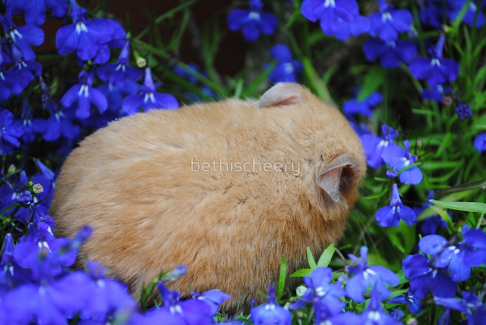 hamster sleeping in flower bed by bethischeery