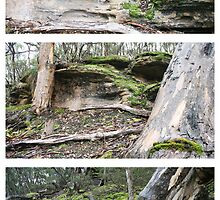 Flinders Chase Triptych by Stephen Mitchell