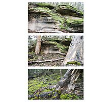 Flinders Chase Triptych Photographic Print