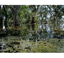 darling  river anabranch , in flood Photographic Print