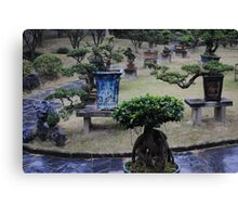 Bonsai/Bonzai trees in China Canvas Print