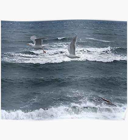 Gulls Over Waves Poster