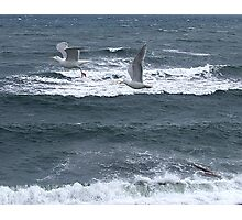 Gulls Over Waves Photographic Print