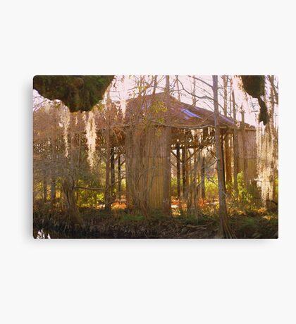 Swamp History Canvas Print