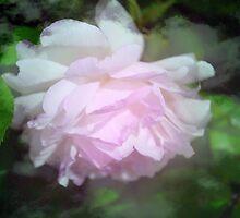 Gently Mercy by Lozzar Flowers & Art