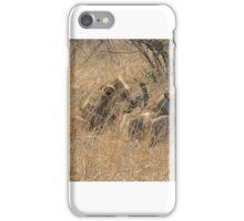 Lions - Kruger iPhone Case/Skin