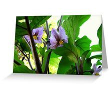 Eggplant Blossoms Greeting Card
