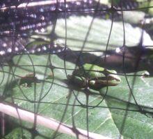 Tree Frog Sitting on a Leaf Sticker
