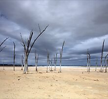Lake Dumbleyung WA by Chris Paddick
