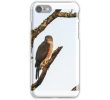 Bird of prey - Kruger iPhone Case/Skin