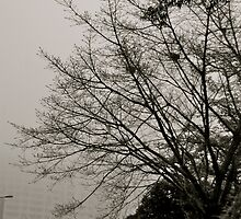 Branches from out of the fog by robigeehk