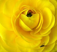 I've Got The Yellow Bug! by Henry Murray