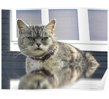 An aged female Cat. Poster