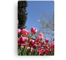 Pink tulips and cherry blossom Canvas Print