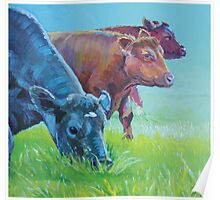 Field of Dreams - Acrylic painting three cows Poster