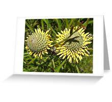 Drumstick Flower Greeting Card