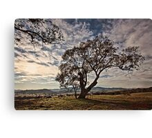 Lone tree on the road to Tidbinbilla (2) in ACT/Australia Canvas Print