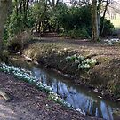 Snowdrops by the Stream by JacquiK