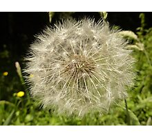 Another Boring Dandelion Fairy Photographic Print