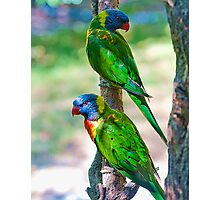 Rainbow Lorikeets Photographic Print