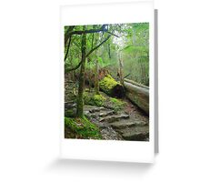Little steps Greeting Card