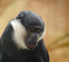 In Deep Thought! This Primate Ponders New Beginnings by miradorpictures